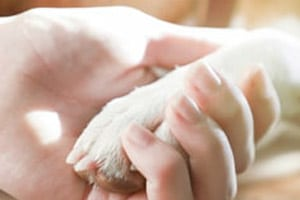 Enhance the support you give to bereaved pet owners